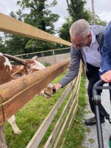 A man is feeding a cow